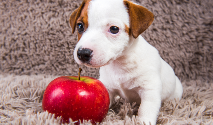 Can Dog Babies Eat Apples